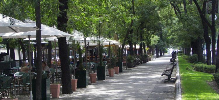 Los árboles como infraestructura de salud pública